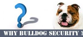 why-bulldog
